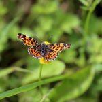 2021 Coetcandec papillon, Carte géographique
